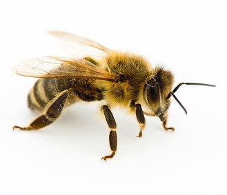how to get rid of bumble bee nest in roof