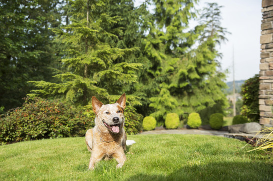 beaverton pest control, Pet and Family Friendly Integrated Pest Management - Portland OR Vancouver WA